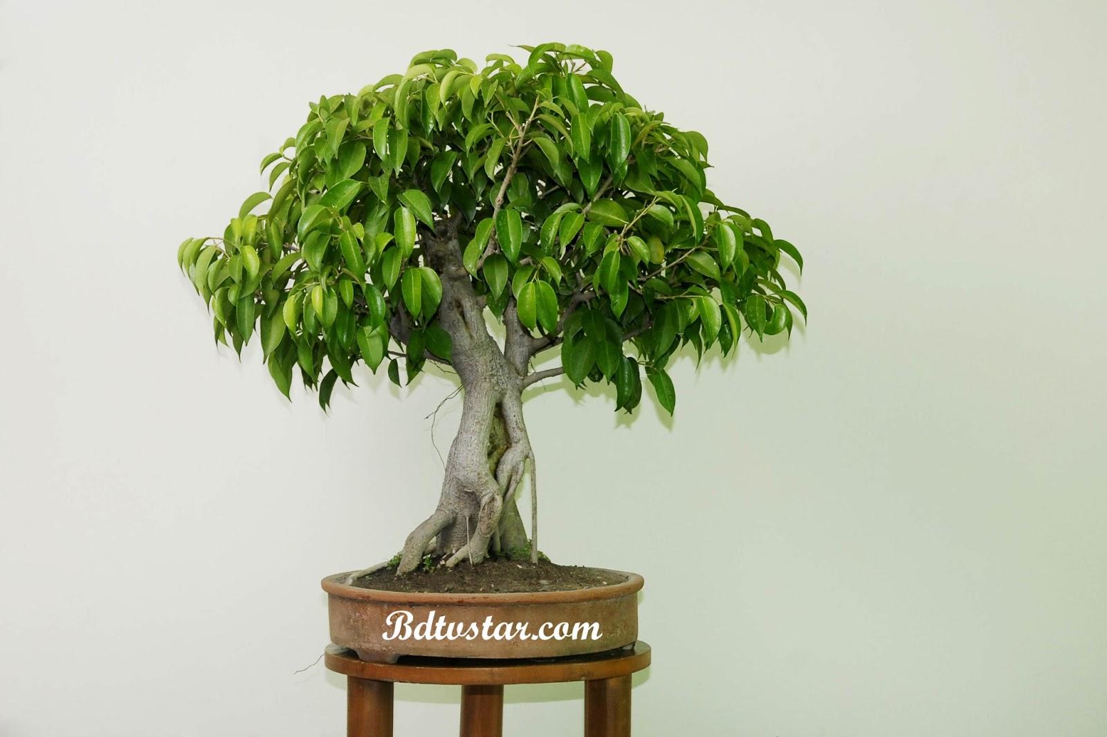 bonsai wallpaper 03 ndash - photo #40