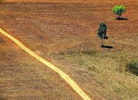 Desmatamento na Amazônia aumenta 28%