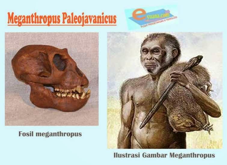 Gambar Manusia Purba Meganthropus Paleojavanicus