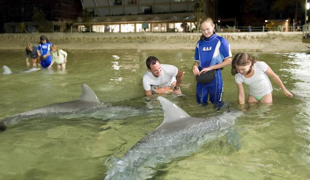 Тангалума. Кормление дельфинов