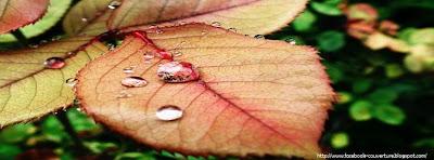 Couverture facebook goutte d'eau et feuille d'automne