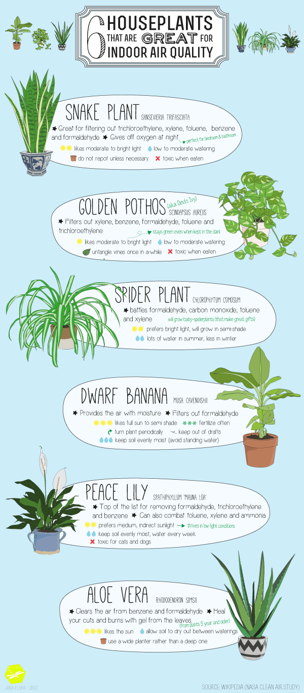 6 plants that are great for indoor air quality