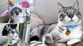 Kucing Mata Juling Jadi Bintang di Internet