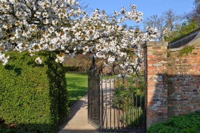 Blossom is beautiful at Beningbrough Hall