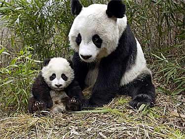 Top 12 Most Amazing Almost Extinct Animals - blogspot.com