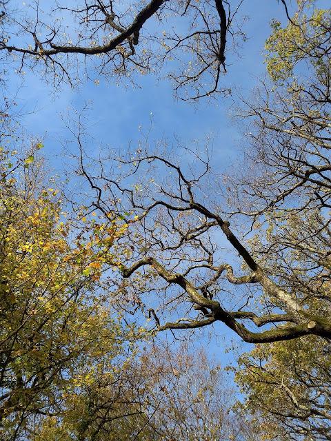 automne arbre branche ciel méditation pleine conscience novembre 2015