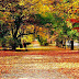 Colorful Autumn trees images photos