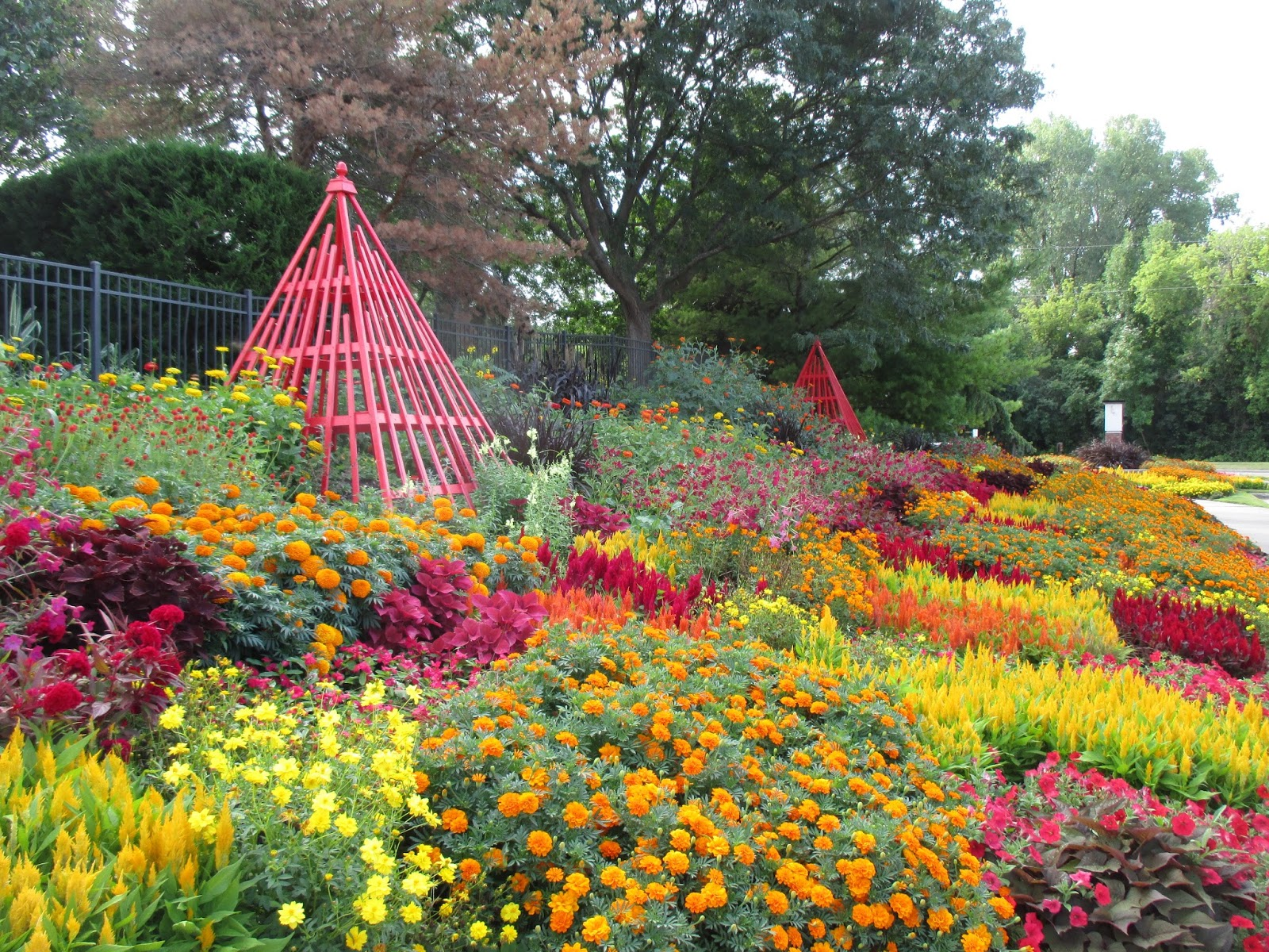 i feel our entrance garden is at peak with the reds yellows and oranges blending in quite well throughout that space as well as the terrace garden behind