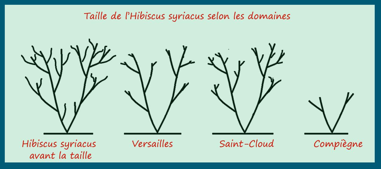 Emejing Les Hibiscus De Jardin Ideas - Amazing House Design ...