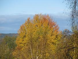 Höstfärger, oktober 2012