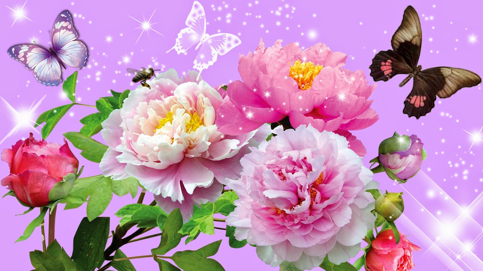 Beautiful Roses and Butterfly
