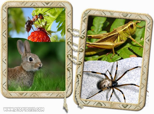 Ant, cony (rabbit), locust (grasshopper) and spider