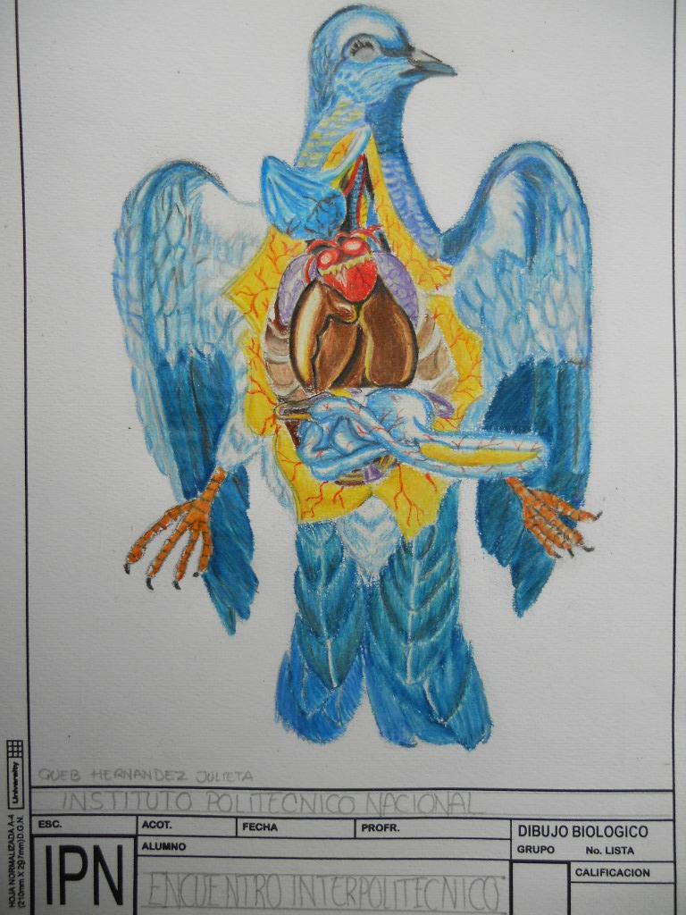Dibujo Biológico: INTERPOLITÉCNICO en formación, ilustrando ...