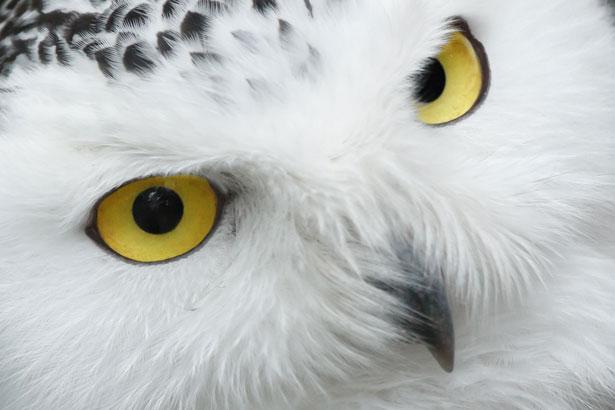 owl eyes on you