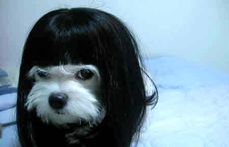 Sadako dog