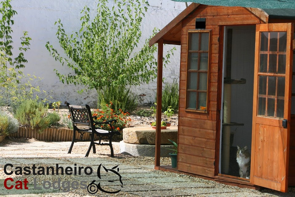 Castanheiro Cat Lodges