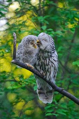 Beautiful Photos of Owl and her Owlet