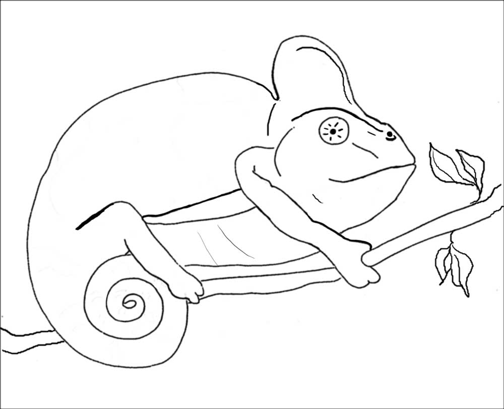 chameleon coloring pages - photo#16