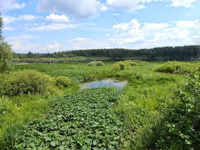 Река впадает в Пименов пруд