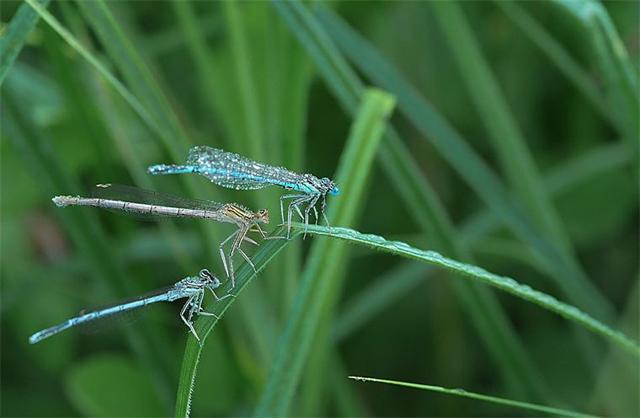 Fotos em macro de insetos molhados