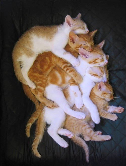 group-cat-hug.jpg