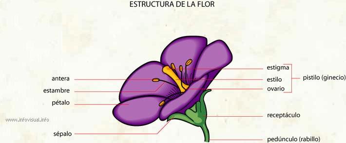 estructura y funcion de las flores: