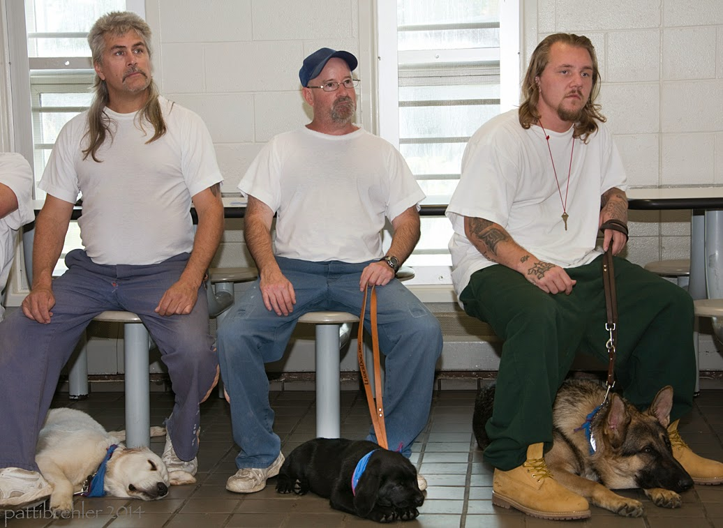 Three men, dressed in blue prison pants and white t-shirts are sitting and facing the camera. They all have their hands resting on their knees, and each one has a puppy lying on the tile floor between their feet. The puppy on the left is a yellow lab, the middle puppy is a black lab, and the puppy on the right is a german shepherd.