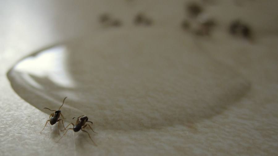 heissatopia we 39 ve got mmmm ants in our pants
