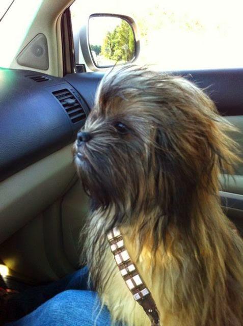 perro disfrazado de chewbacca