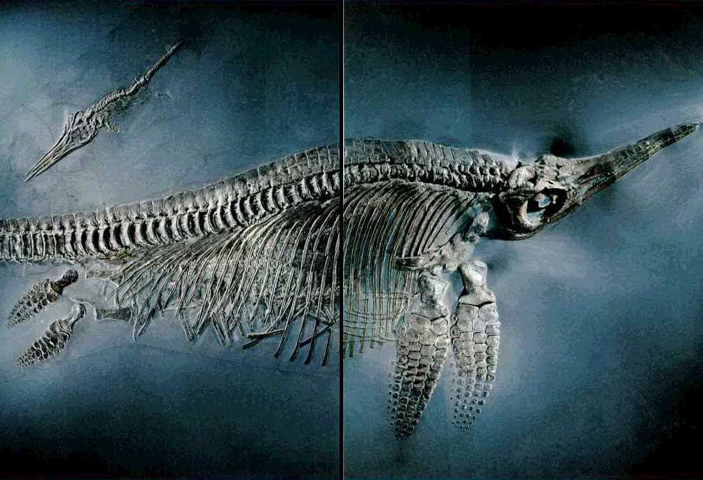 bensozia kraken hints of a giant triassic octopus