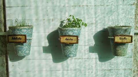 Vasos com cebolinho, coentro e tomilho devidamente etiquetados