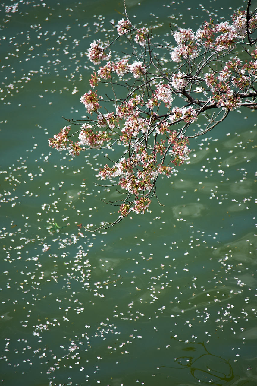 Shinjuku Mad - Days of carefreeness are merely a cherry blossom long 11