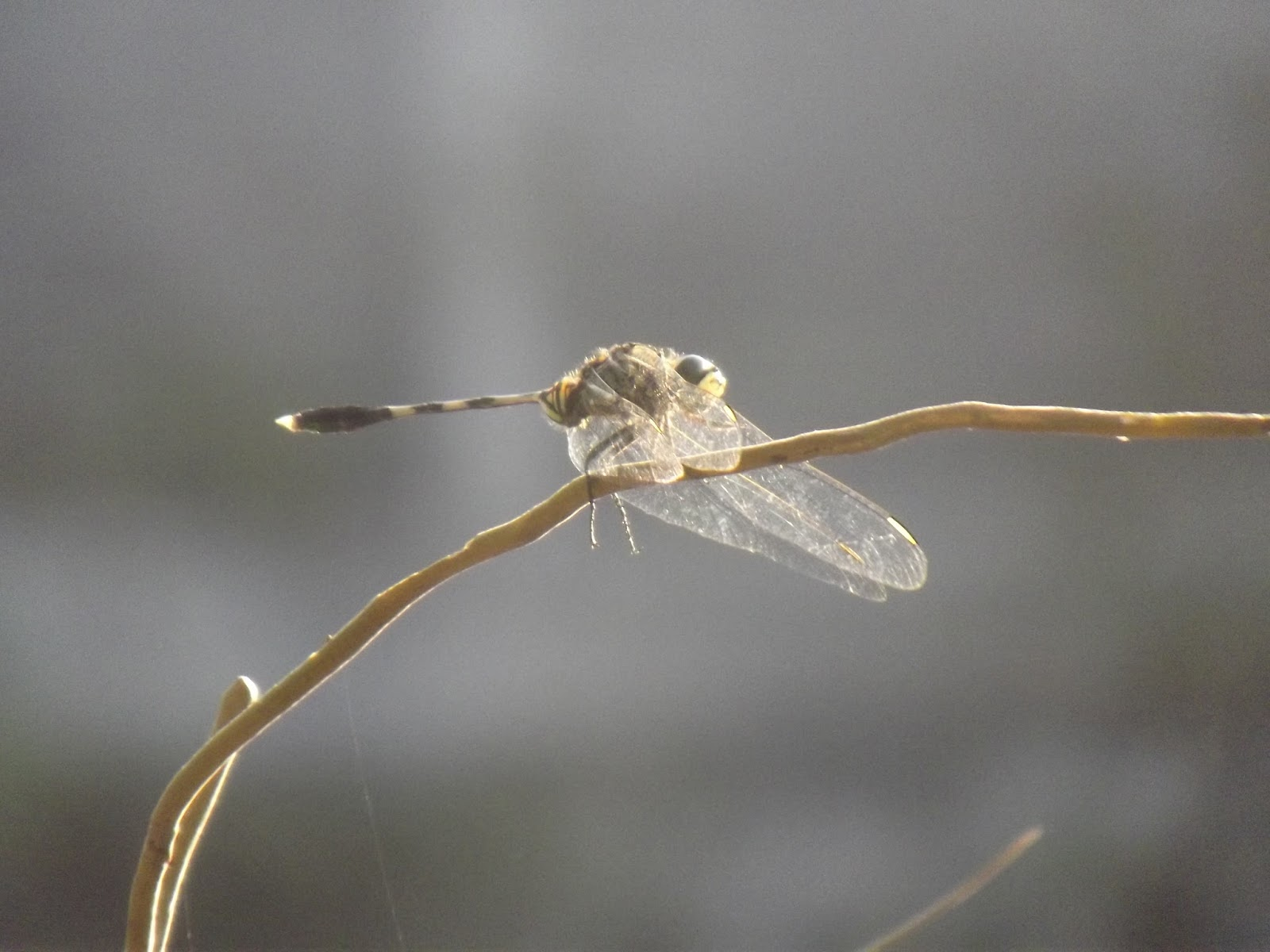 Biologi Mania My Album Macrographi Arthropoda
