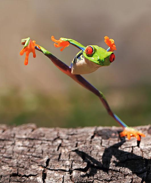 dongvat hai huoc, anh dong vat hai huoc, anh ech xanh hai huoc, anh than lan gecko, anh dong vat vui nhon.