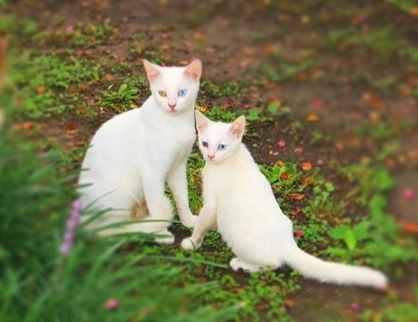 animal and their adorable mini-me 14