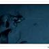 Murciélagos vampiros atacan a una bandada de pingüinos