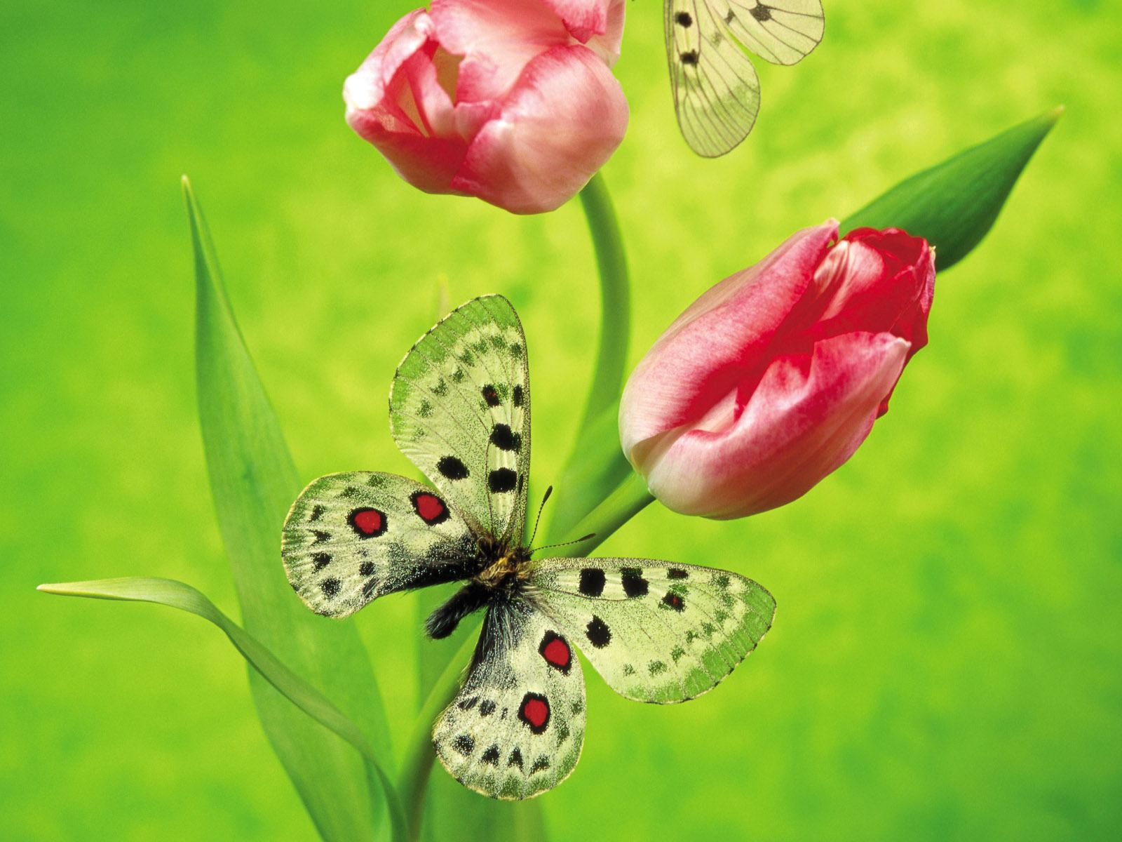 most beautiful flowers wallpapers butterflies - photo #18