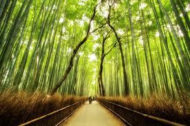 SANGANO BAMBOO FOREST, JAPAN
