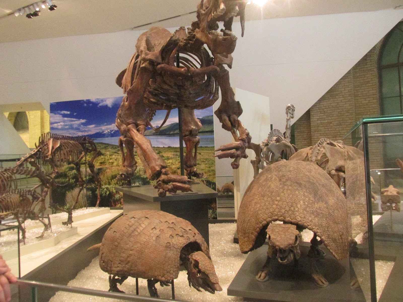 What happens when a non-accredited paleontology fan blogs: An ...
