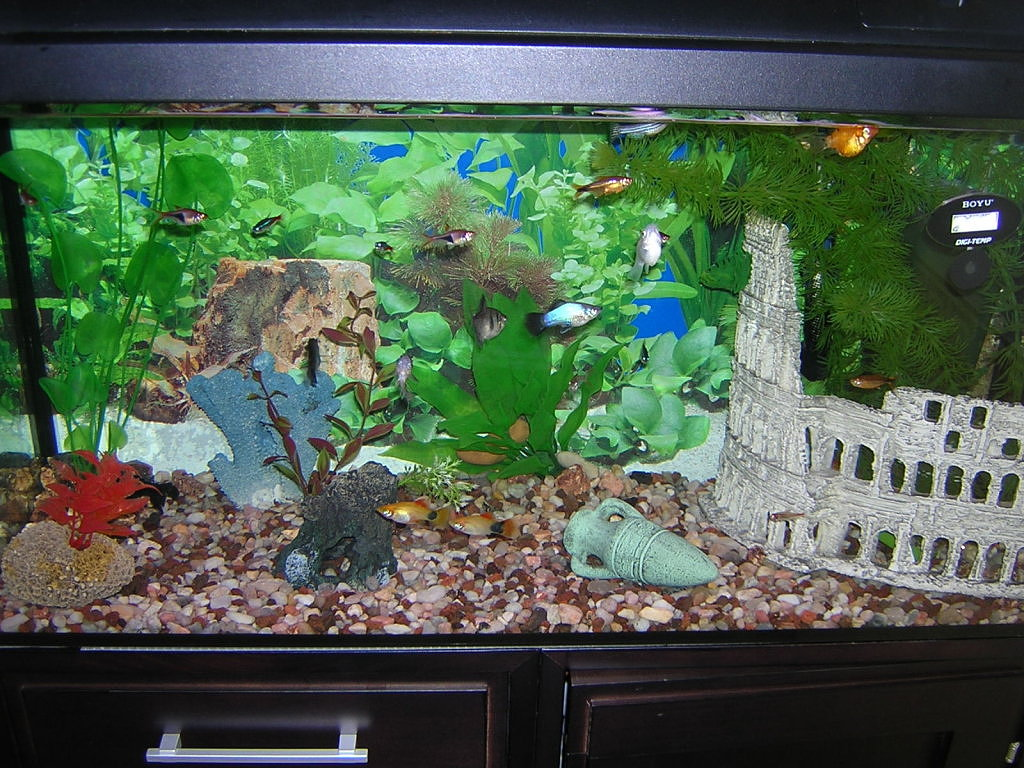 El negocio de los peces acuario kiss for Carpas para acuario