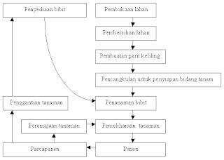 Cara Budidaya Lidah Buaya (Aloe Vera)