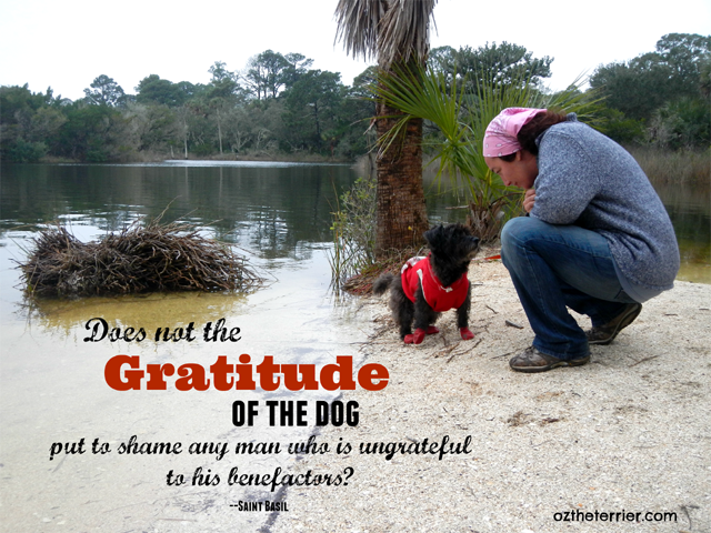 does the gratitude of the dog put to shame any man who is ungrateful to his benefactors? saint Basil