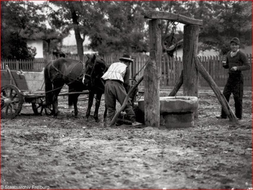 La adapat calul 1935
