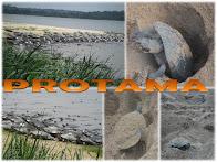 PROTAMA - Projeto Tartaruga da Amazõnia