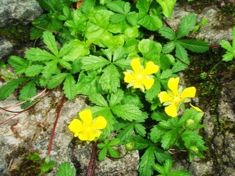 Fotos flores amarillas Photaki - Fotos Y Nombres De Flores Amarillas