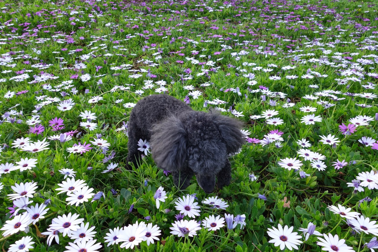 Paws reports field of flowers the other day on our walk we came across a beautiful field of flowers and we got to frolic through it so i thought i should take a moment to izmirmasajfo