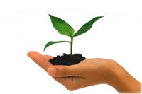 Întreprinderile mici și mijlocii (IMM)