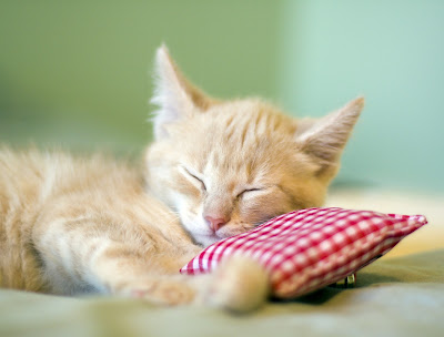 "The best length of time for a ""cat nap,"" or power nap, is less than 30 minutes."