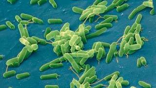 Сочетанное использование противомикробных и противовоспалительных средств при заболеваниях, обусловленных условно-патогенными бактериями