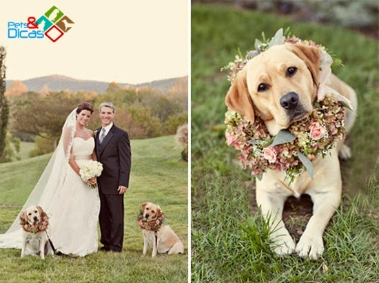 Cães em casamento